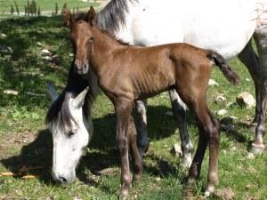 cavalls 056