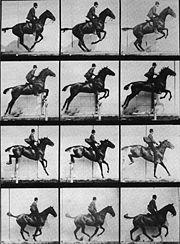 Otra secuencia de Muybridge, de la Wiki, estudiando el salto del caballo